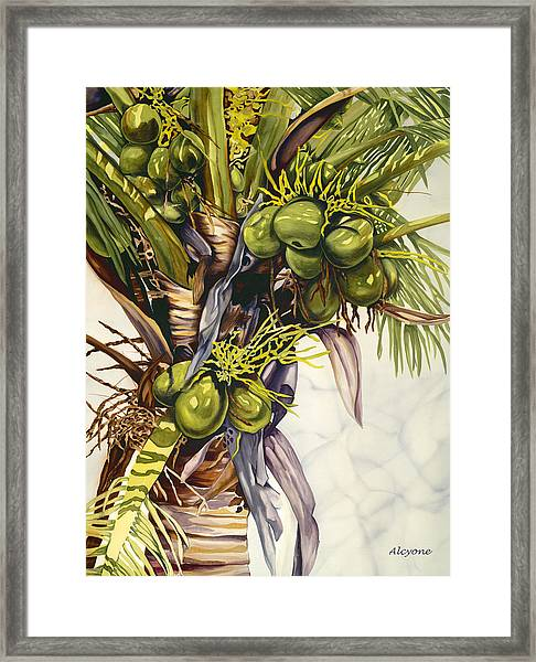 Coconut Bouquet Framed Print