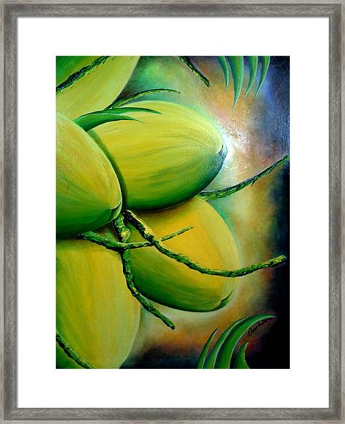 Coconut In Bloom Framed Print