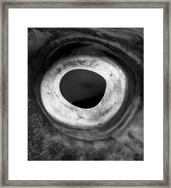 Cod's Eye Framed Print