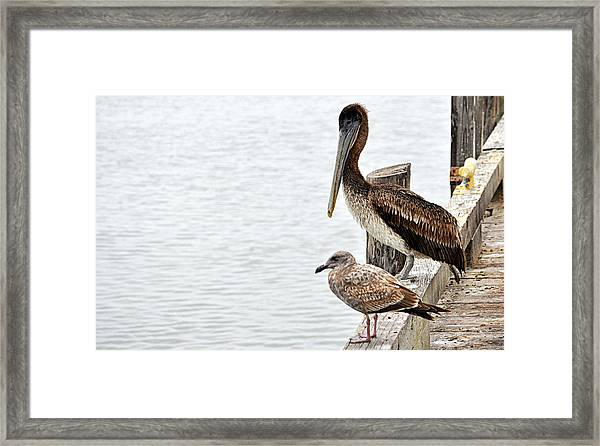 Coexist Framed Print