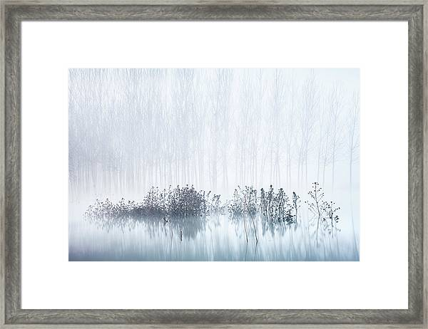 Cold & Foggy Morning In The Swamp Framed Print