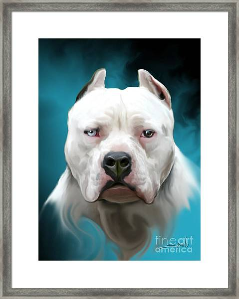 Cold As Ice- Pit Bull By Spano Framed Print