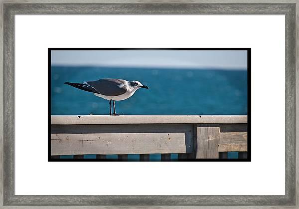 Cold Gull Framed Print