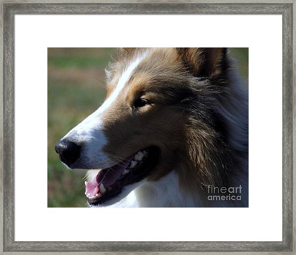 Collie At The Ashokan Framed Print