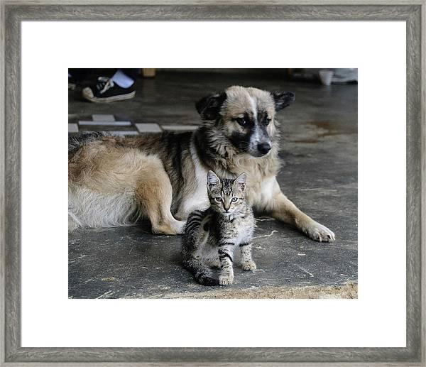 Colombia, Minca Kitten And Dog Framed Print by Matt Freedman