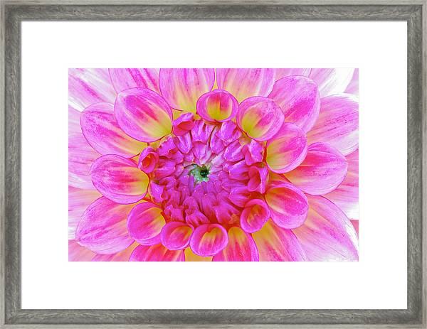 Color Burst Framed Print