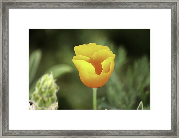 Color Of Joy Framed Print by Luna Curran