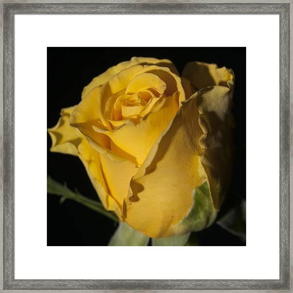 Color Of Love Framed Print