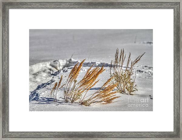 Color Spots Framed Print