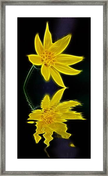 Colorado Wildflower Framed Print