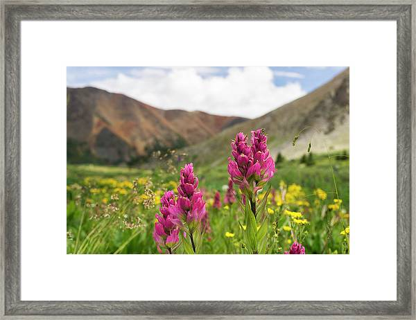 Colorado Wildflowers In The Backcountry Framed Print