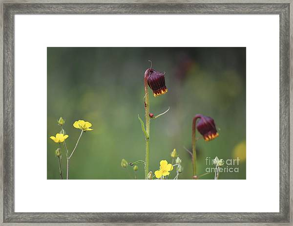 Framed Print featuring the photograph Colorado Wildflowers by Kate Avery