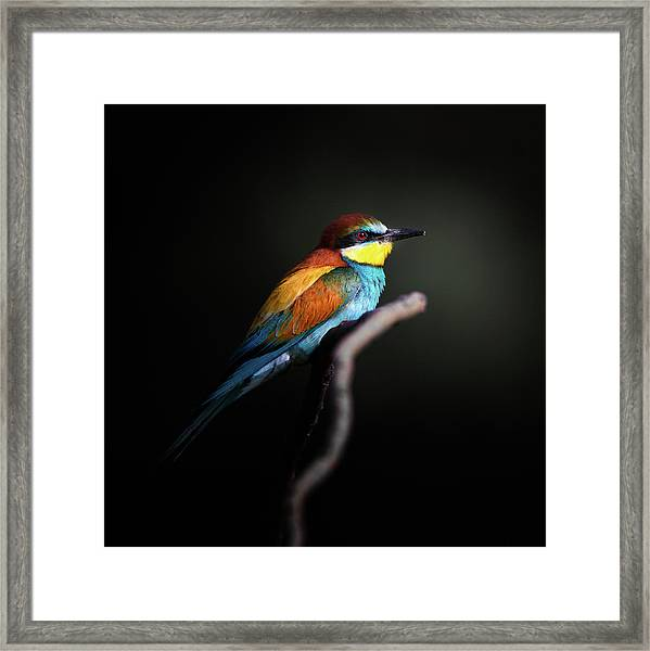 Colorful Darkly Framed Print