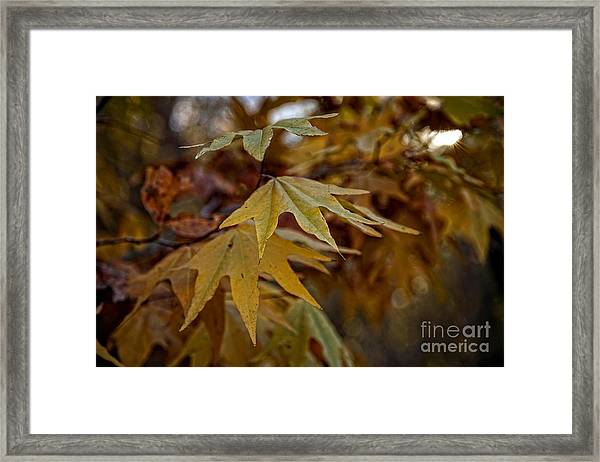 Colorful Fall Foliage In The Verde Canyon Arizona Framed Print