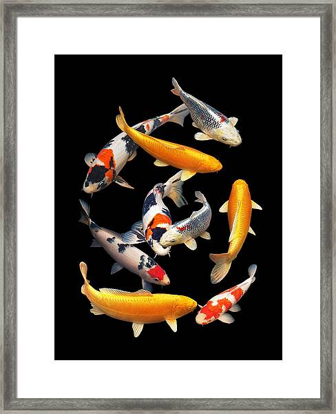 Colorful Japanese Koi Vertical Framed Print