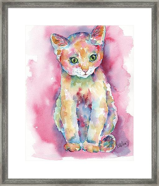 Colorful Kitten Framed Print
