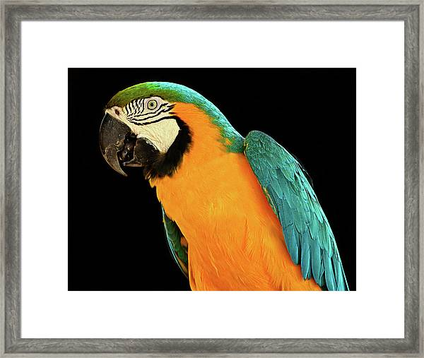 Colorful Macaw Bird Framed Print