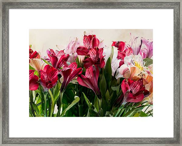 Colorful Peruvian Lillys Framed Print