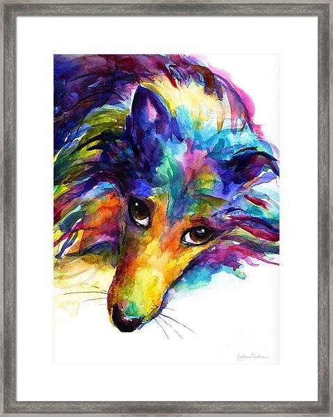 Colorful Sheltie Dog Portrait Framed Print