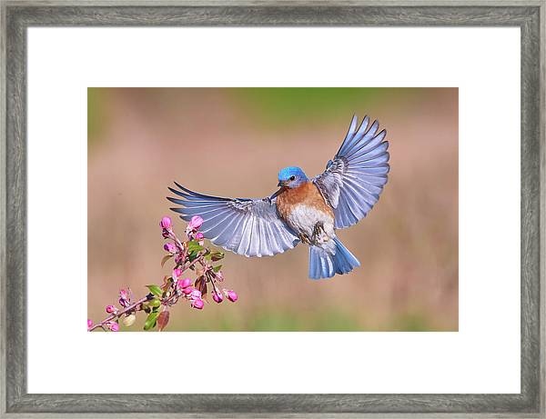 Colorful Spring Framed Print by Jim Luo