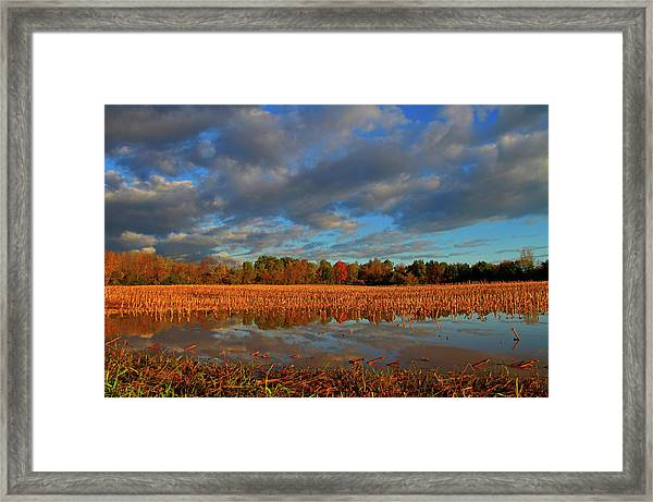Colorful Trees Reflected In Flooded Framed Print
