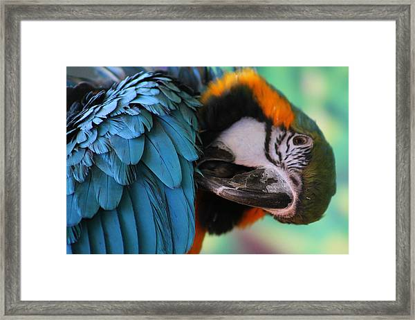 Colorful Wrap Framed Print