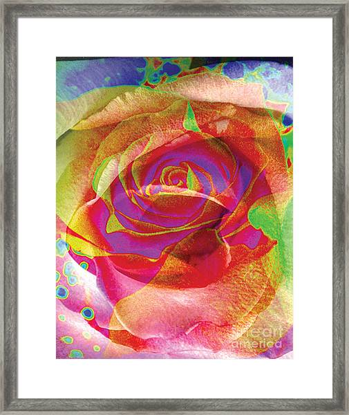 Colorfull Rose Framed Print