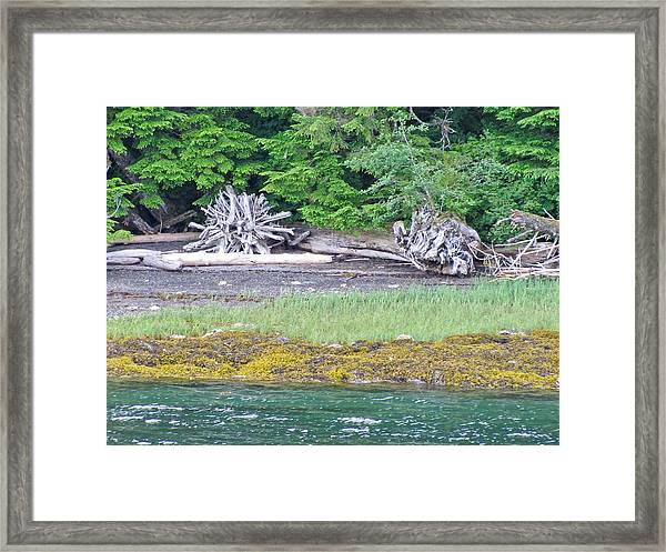 Colors Of Alaska - Layers Of Greens Framed Print