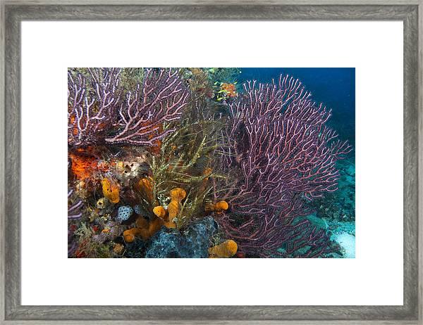 Colors Of Reefs Framed Print