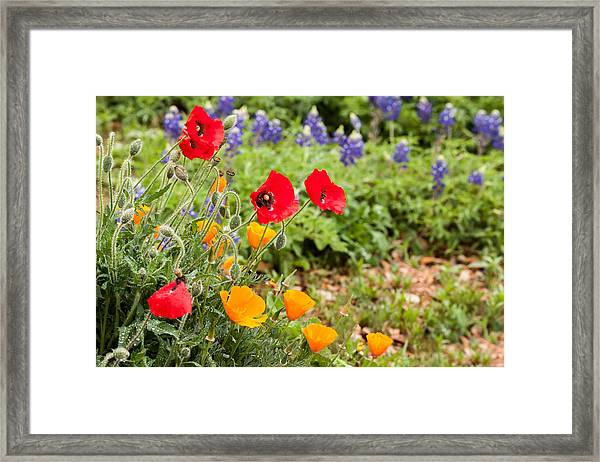 Colors Of Spring Framed Print