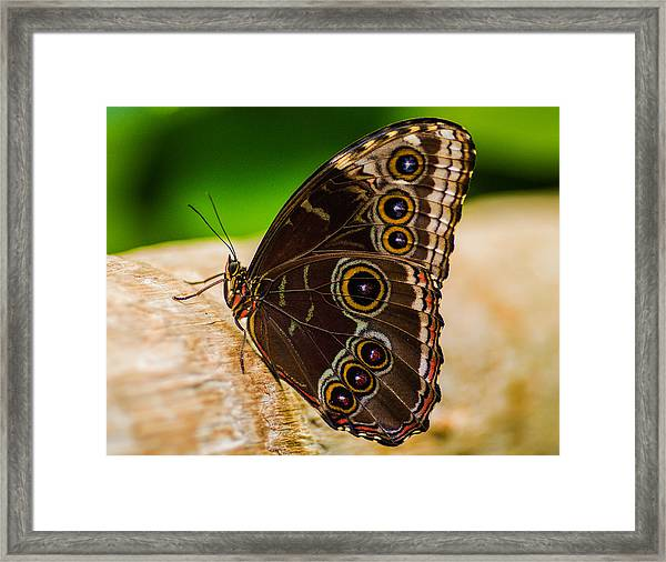 Framed Print featuring the photograph Colour Display by Garvin Hunter