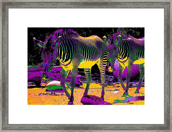 Colourful Zebras  Framed Print