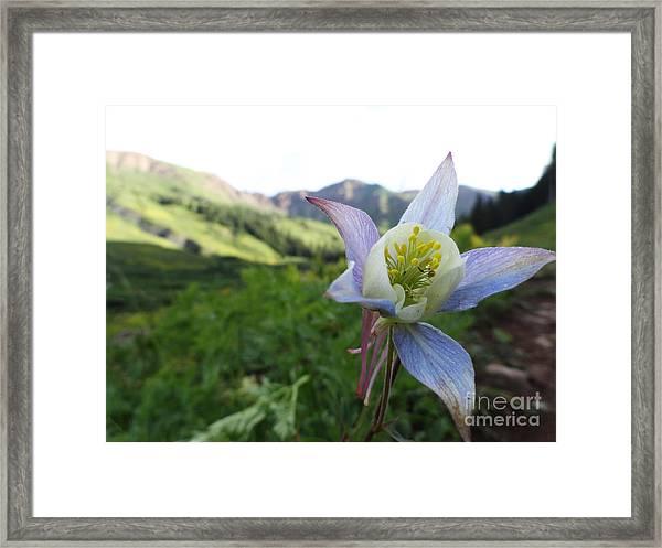 Columbine Framed Print