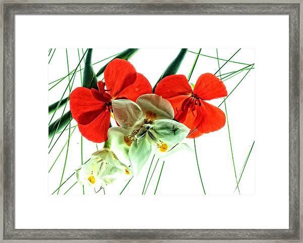 Combo Bouquet Framed Print