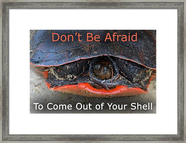 Come Out Of Your Shell Framed Print