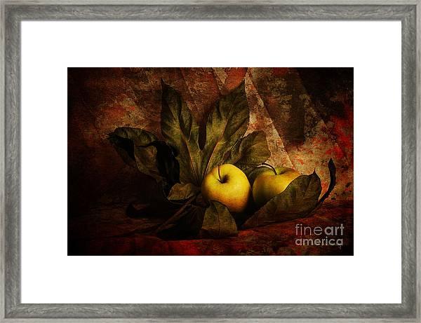 Comfy Apples Framed Print