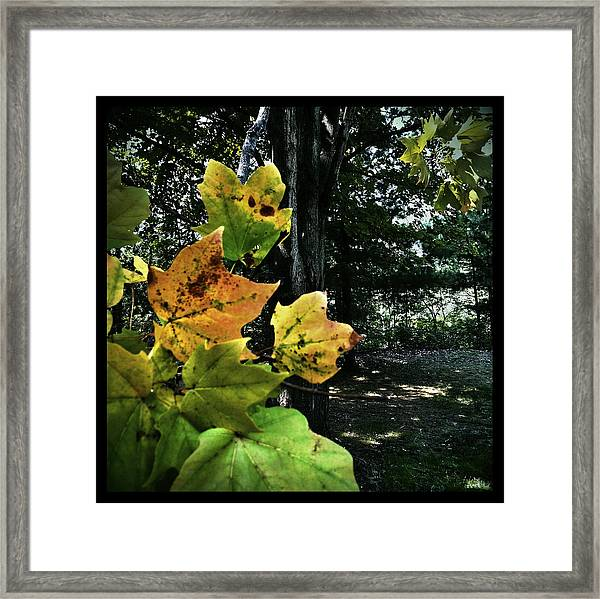 Coming Of Fall Framed Print