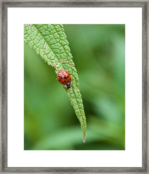 Coming To The End Of The Leaf Framed Print