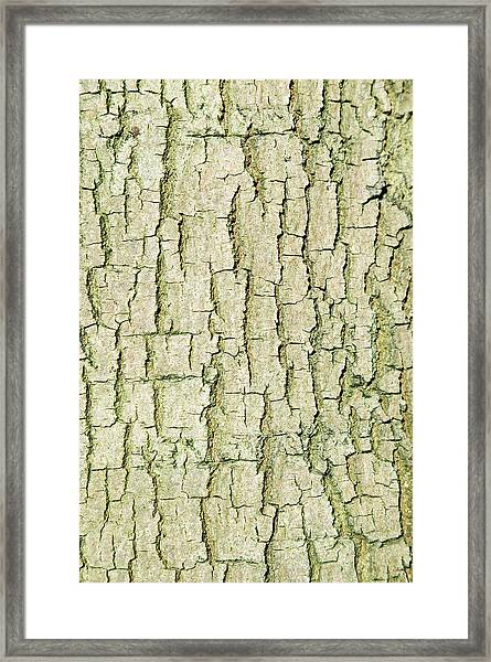 Common Lime Tree Bark Framed Print