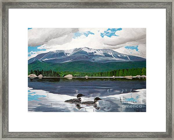 Common Loon On Togue Pond By Mount Katahdin Framed Print