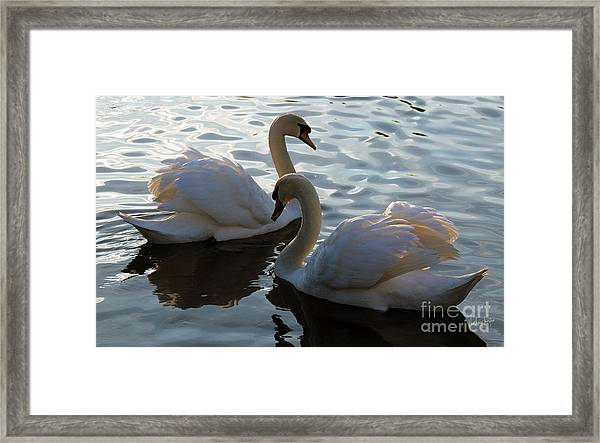 Compatibility Framed Print