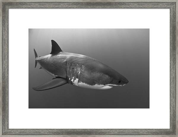 Composed Framed Print by David Valencia