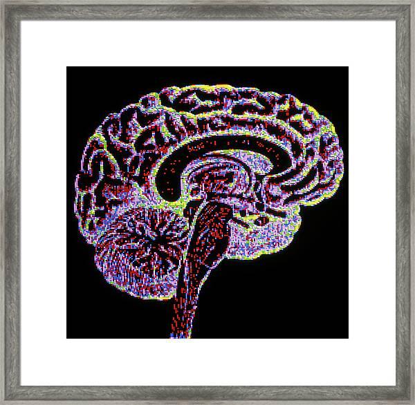 Computer Artwork Of Section Through Healthy Brain Framed Print