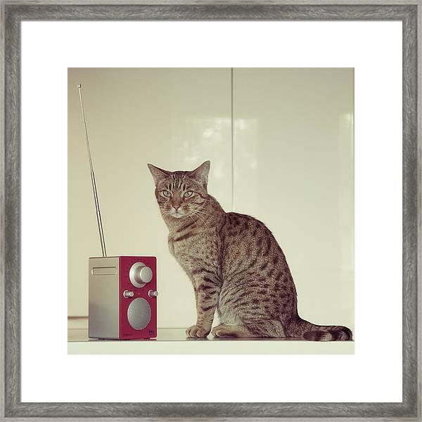 Concentrated Listener Framed Print