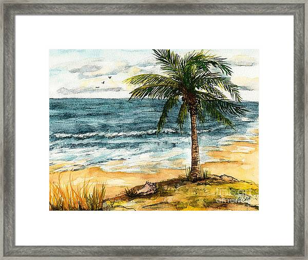 Conch Shell In The Shade Framed Print