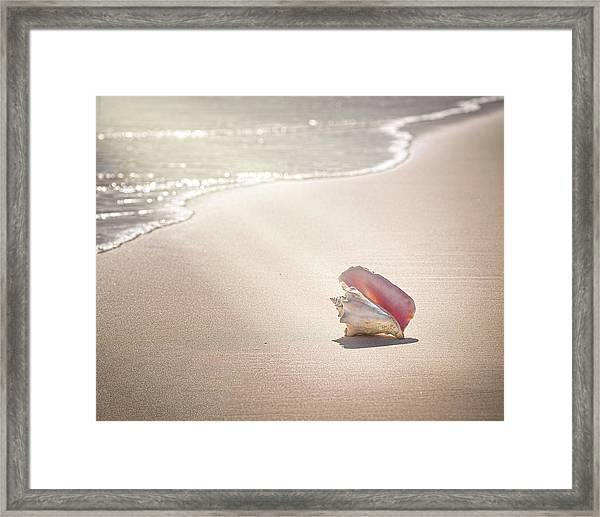 Conch Shell On Pink Sand Beach, Harbour Framed Print