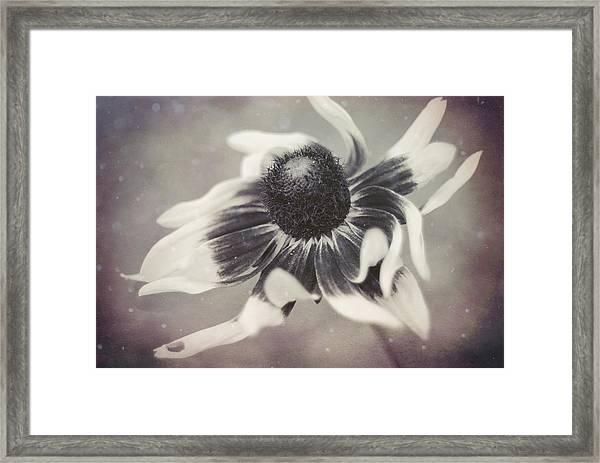 Coneflower In Monochrome Framed Print