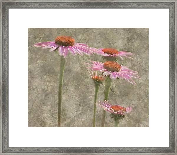 Coneflowers Framed Print