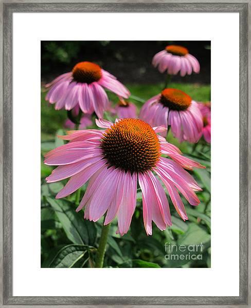 Conehead Daisy Framed Print