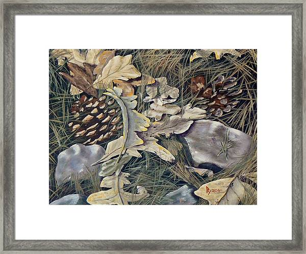 Cones Rocks Leaves And Needles Framed Print